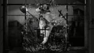 Michael Jackson's This is it, documentaire de Kenny Ortega (2009). Il est mort et il va mourir. Ce que Barthes avait vu dans la photo de Lewis Payne, nous le voyons ici s'étirer sur toute la durée d'un film, montage d'images tournées pendant les dernières répétitions d'un concert fin prêt, mais qui n'aura pas lieu.